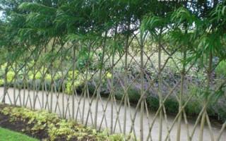 Zajistěte si živý plot z vrby — originální plot za minimální cenu