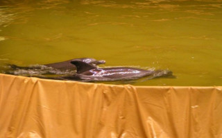 Chlorace bazénu s bělostí — tipy a proporce | Green-Pages.info