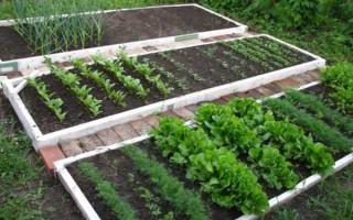 Zeleninová zahrada pro líné a inteligentní: jak vytvořit pohodlné a produktivní postele | Green-Pages.info