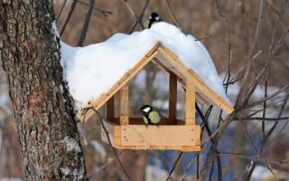 Jak si vyrobit krmítko ptáků vlastními rukama? 19 původních nápadů (180 fotografií; video) Recenze | Green-Pages.info
