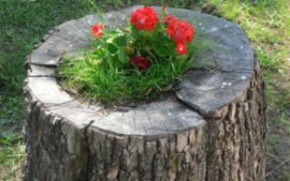 Udělejte si konopí květinové záhony: fotografie, jak vyrobit ze dřeva, řezy, kulatiny, kombinace s kameny | Green-Pages.info