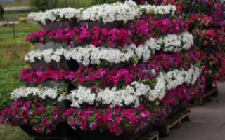 Udělejte si svislé květinové záhony z improvizovaných prostředků: fotografie, květinová zahrada z mřížky, dýmky, pneumatiky | Green-Pages.info