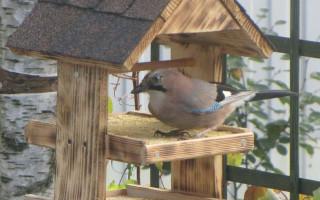 Krmítka pro ptáky; možnosti, jak to udělat z obyčejných materiálů (55 fotografií) | Green-Pages.info