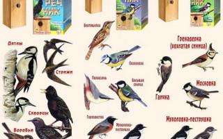 Vytvoření holubníku z šrotu pomocí vlastních rukou v roce 2019 | Green-Pages.info