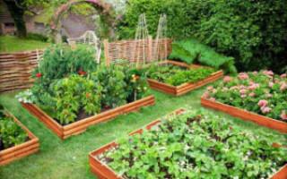 Do-it-yourself rajčatová zahrada na otevřeném prostranství a na skleníkové fotografii | Green-Pages.info