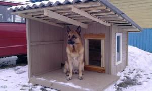 Jak a jaký je nejlepší způsob, jak izolovat boudu | Green-Pages.info